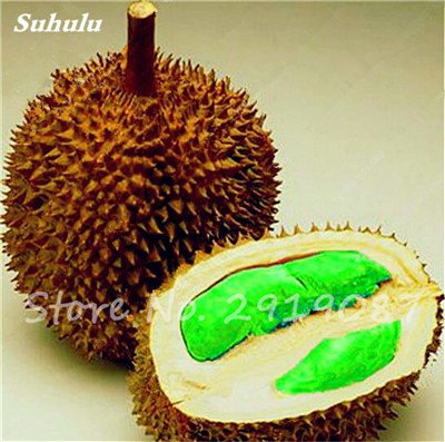 10 Pcs Durian Seeds délicieux roi de fruits sains Tropical Giant Trees Jardin Plantes Bonsaï Non-GMO Haute Nutrition 3