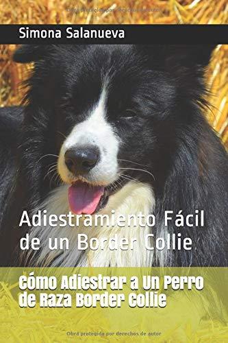 Cómo Adiestrar a Un Perro de Raza Border Collie: Adiestramiento Fácil de un Border Collie