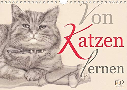 Von Katzen lernen (Wandkalender 2021 DIN A4 quer)