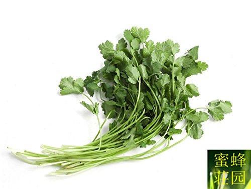 La vente de taux de germination des graines de coriandre de haute légumes 100 graines (xiang cai)