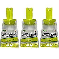 Japanese beetle traps
