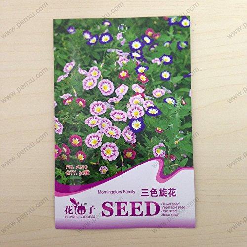Hot Sale 20 PCS / Lot White & amp!; Red bord Géranium Graines, Graines vivace Fleur Pelargonium Peltatum Fleurs domestiques, # 7VB94S