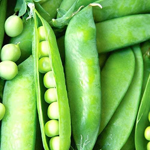 Semi Di Piselli 100PCS Che Producono Molte Verdure Verdi Da...