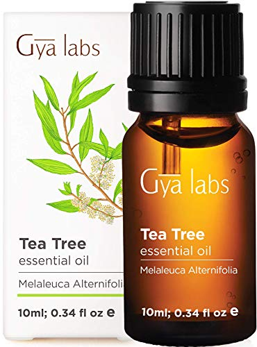 Gya Labs Tea Tree Essential Oil for Skin Care & Hair Care - Topical for Acne Treatment, Dry Scalp & Healthy Nails - Diffuse to Purify Air - 100% Pure Natural Therapeutic Grade for Aromatherapy - 10ml