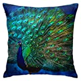antoipyns Throw Pillow Cases-Peacock Art-Pillow Covers Decorative (18 X 18) in Pillowcase Cushion Covers with Zipper