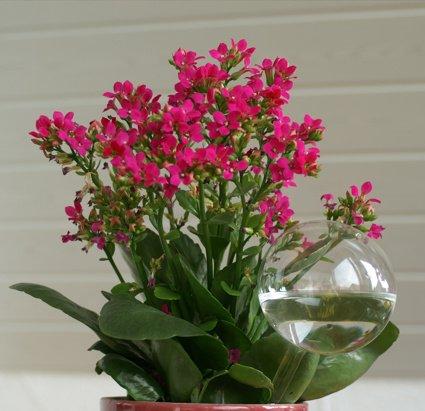 Blumendurstkugeln aus Glas 5er Set d 5/6/7/8/9cm mundgeblasen handgeformt Wasserspender Durstkugeln Lauschaer Glas das Original