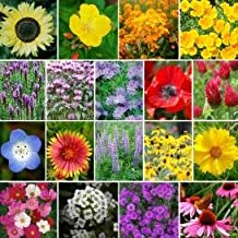 4400 Pollinator Attracting Wildflower Seeds to Attract Bees, Butterflies, and Other Beneficial Insects