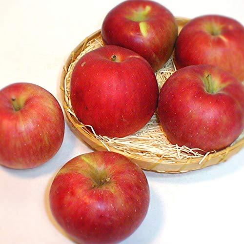 青森・長野産 紅玉リンゴ こうぎょくりんご 10kg かなり小玉 56〜66個前後入り