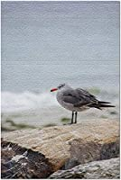 ペブルビーチ写真A-90688のHDコールドバード(大人19x27のためのプレミアム1000ピースジグソーパズル)
