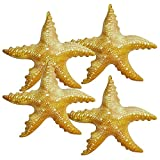 Jet Creations Inflatable Animals 20 inch Wide Pack of 4 Star Fish Party Pool Supplies Favors Birthday Gifts for Kids an-STAR4, Multi