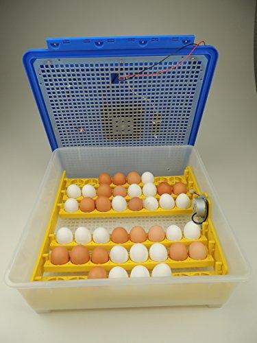 Campo24® V48 + 5 tlg. Zubehör Motorbrüter für bis zu 48 Eier/Inkubator/Vollautomatischer Motorbrüter/ Incubator - 4