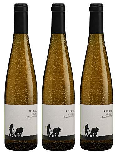 Bio Wein Weißwein Trocken Riesling Deutschland Pfalz 2018 Qualitätswein Vegan (3 x 0,75l)