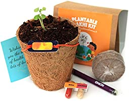 bioQ Plantable Rakhi (containing Seeds) | Eco Friendly Kit with Planting Set & Festive Essentials | Orange Sun Design
