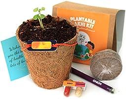 bioQ Plantable Rakhi (containing Seeds) | Eco Friendly Kit with Planting Set & Festive Essentials | Orange Sun Design