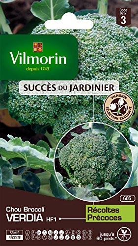 Vilmorin 3360743 Pack de Graines Chou Brocoli Verdia HF1 Création