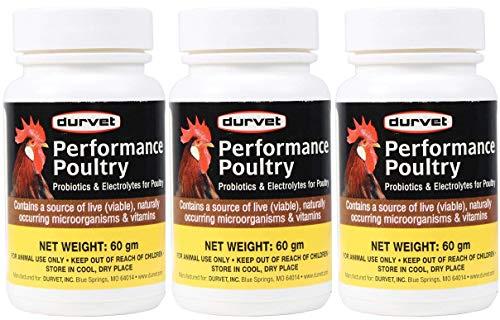 Durvet Powder Probiotic Supplement For Poultry 100 gm