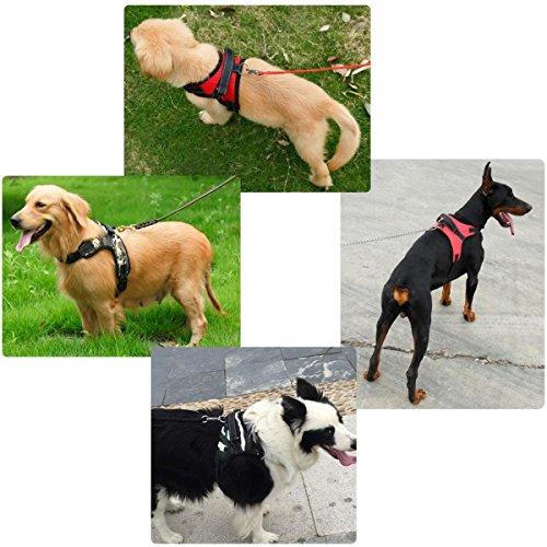 Shop Sport - Arnés de Control de Mascotas Ajustable para Perro y ...