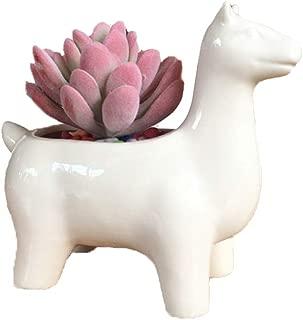 Youfui Cute Animal Succulent Planter Flower Pot Decor for Home Office Desk (Alpaca)