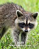 2020 Weekly and Monthly Planner: Raccoon - Monthly Calendar with U.S./UK/ Canadian/Christian/Jewish/Muslim Holidays– Calendar in Review/Notes 8 x 10 in.-Wildlife Animals Nature