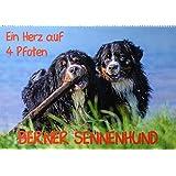 Starick, S: Herz auf 4 Pfoten - Berner Sennenhund(Premium, h