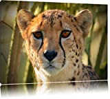 Pixxprint junger Gepard im Dschungel auf Leinwand, XXL