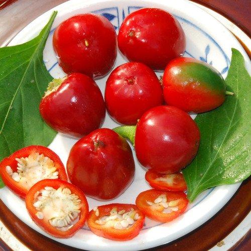 Plant World Seeds - Sweet Cherry Pimento Seeds