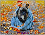TYmall 300 Pieces Puzzle French Bulldog Dog Puppy Puppies Autumn Fun Puzzle Gifts for Teens and Kids