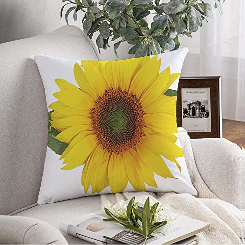 Pillow Covers Case Cozy Single White Beautiful Brittle Sunflower with Flower Leaves Halva Or Isolated On for Plants Nature Throw Pillow Cushion Cover for Couch Sofa Home Decoration 16x16 Inch