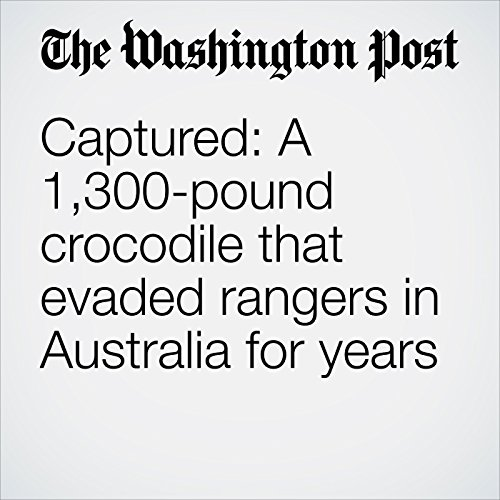 Captured: A 1,300-pound crocodile that evaded rangers in Australia for years audiobook cover art