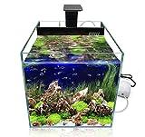 GankPike Würfel LED Aquarium-Komplett-Set, 31 Liter inklusive...