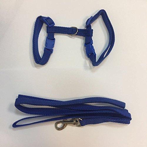 SYG_FR LAISSE Collar + arnés Regulable Nailon para Gato Gatito Longitud 1.2M 4Colores para Elegir, Azul