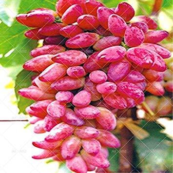 VISTARIC 12: Big cerise semences Multifarious fruits Bonsaï semences Succulent Fruit Plantes Nature, Balcon Cour Four Seasons Plantation 20 Pcs 12