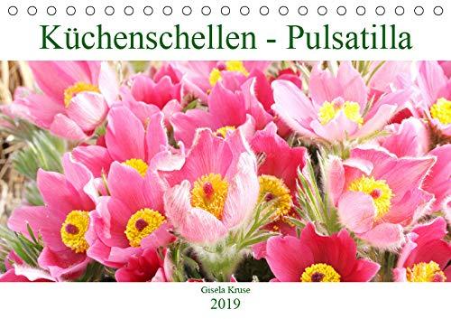 Küchenschellen Pulsatilla (Tischkalender 2019 DIN A5 quer): Kuh- oder Küchenschellen als Zierpflanzen im Garten (Monatskalender, 14 Seiten ) (CALVENDO Natur)