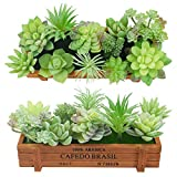 11 pezzi artificiali succulente affolla piante assortite falso succulente steli finto flor...