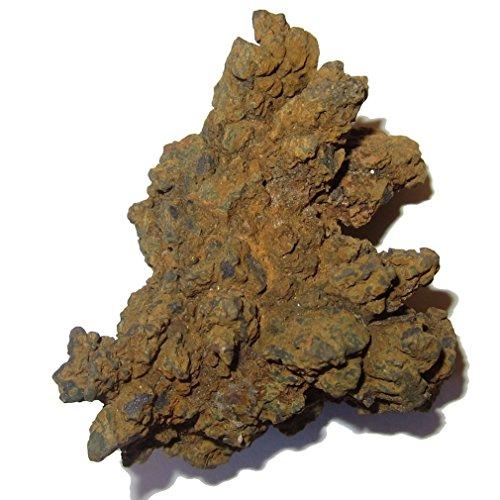 Satin Crystals Coprolite Fossil P01 Kothaufen, echter Dinosaurier, Braun / Orange, 5,1 cm