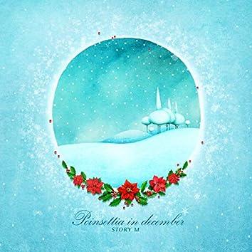 12월의 포인세티아