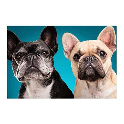 Siyse DIY 5D-Bulldog francés-Animal-Kit de Pintura de Diamantes de imitación de Cristal Bordado de Punto de Cruz artesanía decoración de la Pared del hogar 40x50cm