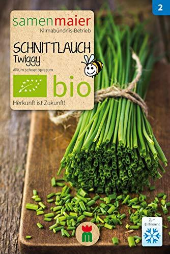 BIO Schnittlauch, Twiggy (Allium schoenoprasum)