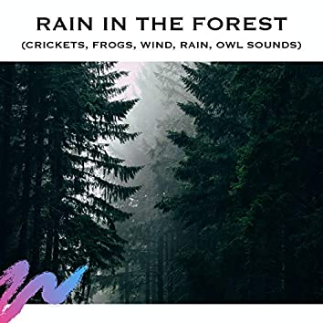 Rain in the Forest (Crickets, Frogs, Wind, Rain, Owl Sounds)