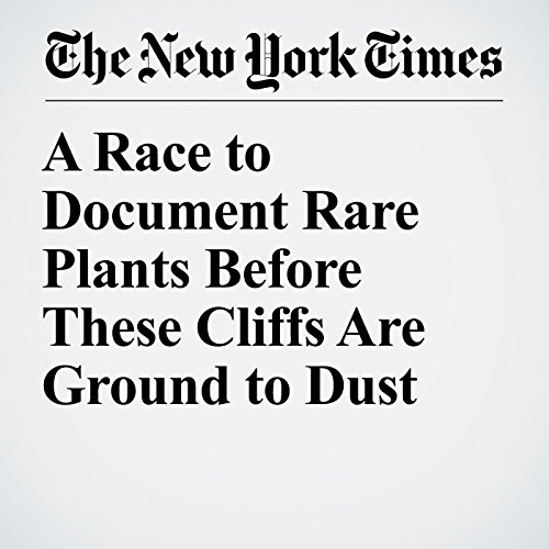 A Race to Document Rare Plants Before These Cliffs Are Ground to Dust copertina