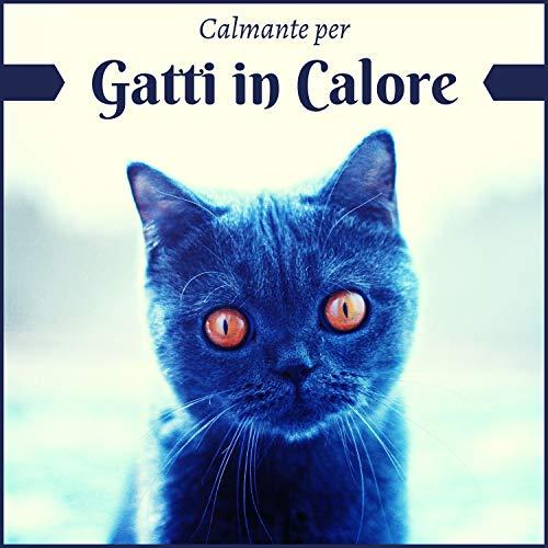 Calmante per gatti in calore