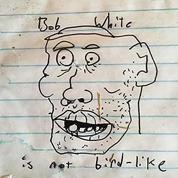 Bob White Is Not Bird-Like