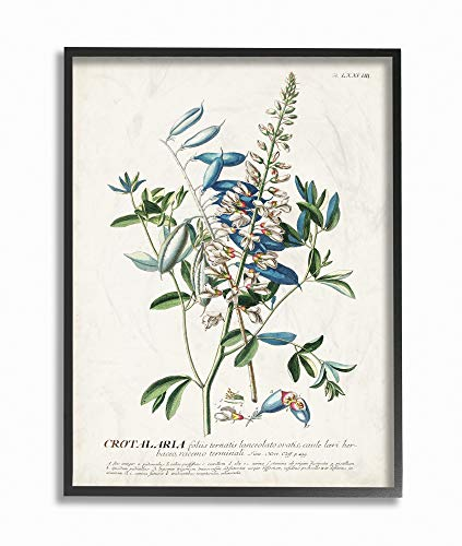 Stupell Industries Botanical Plant Illustration Flowers and Leaves Vintage Black Framed Wall Art, 16 x 20, Design by Artist Unknown