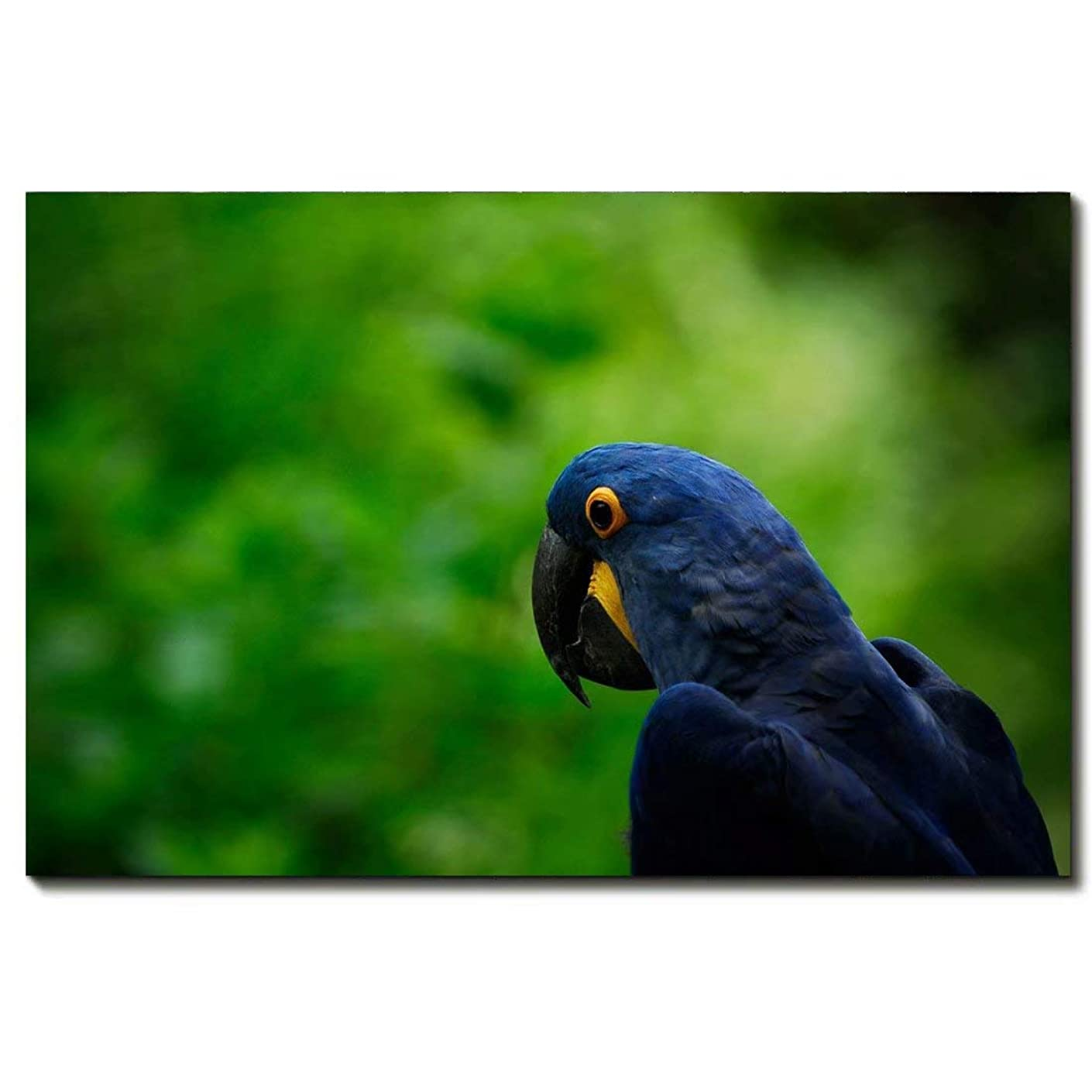 Print Artwork Blue-Black Parrot Wall Art Decor Poster Artworks For Homes Canvas Prints Picture Animal Pictures Painting On Canvas Modern Seascape Home Office Decor,16 * 24inch(40 * 60cm)