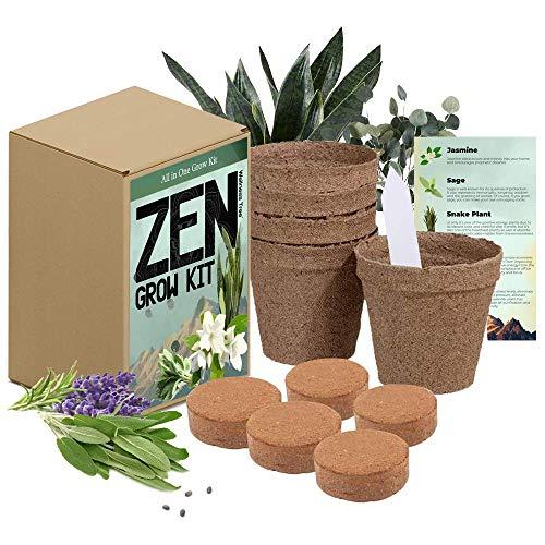 Zen Garden Grow Kit - Spirtual House Plants Healing Plant Grow Kit Gift - Grow Jasmine,...