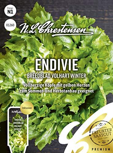 Endivie Breedblad Volhart Winter Samen, Saatgut