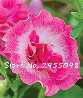 20 Seeds Petunia Kabloom Calibrachoa, mixed bonsai flower seeds, Morning Glory, Pot Plant For Home Garden 9