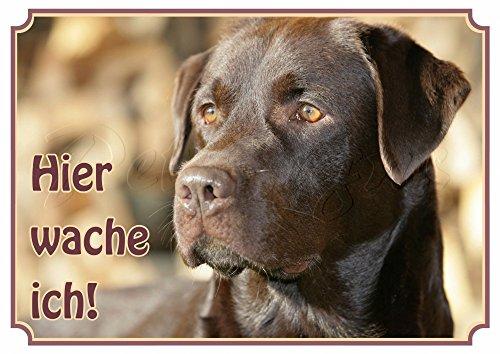 Hundeschild Labrador Retriever - wetterfestes Premiumschild aus Metall, DIN A4