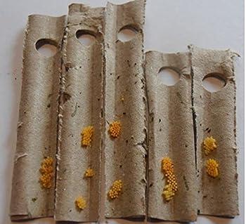 Production Française, espèce de coccinelle locale. 150 oeufs de coccinelles pour 1 arbre. Traitement biologique et naturel contre les pucerons. Efficace sur de nombreux pucerons des arbres : Pommiers, cerisiers, pêchers, tilleuls ... En cas de fortes...