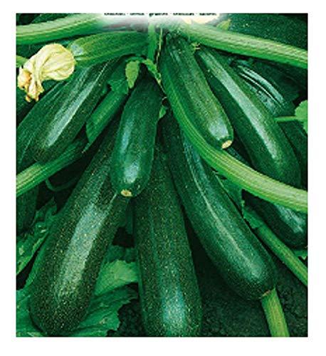 Inception Pro Infinite 75 C.ca Semi Zucchino diamant Hybrid - Cucurbita pepo - In Confezione Originale - Prodotto in Italia - Zucchine - ZI015 - A